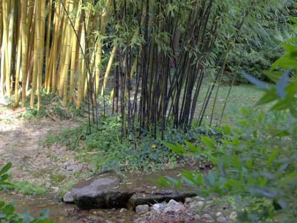 schwarzer bambus im garten – spinjo, Garten und bauen