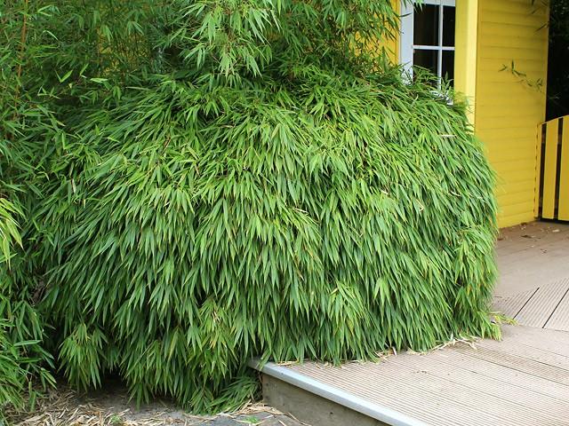 Bambus Kaufen Sichtschutz Pflanzen Mit Einer Bambushecke